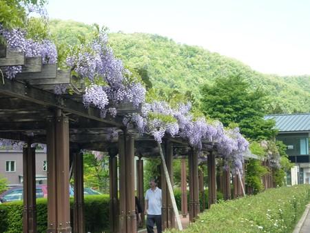 5−吉岡園地の花