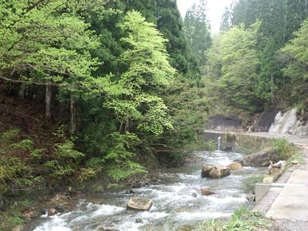 新緑の渓流へ