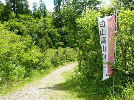 3-白山高山植物園