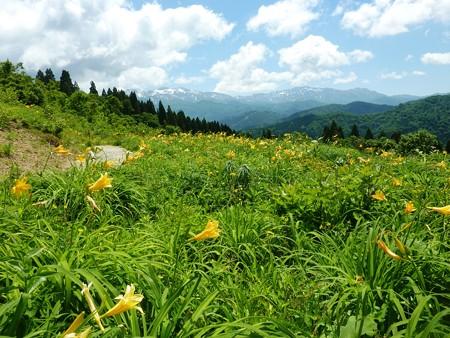 4-白山高山植物園