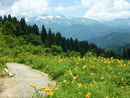 5-白山高山植物園