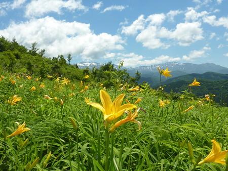 6-白山高山植物園