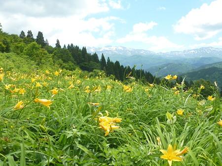 7-白山高山植物園