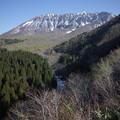 写真: GR2大山新緑