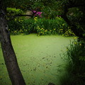 Photos: GR2池