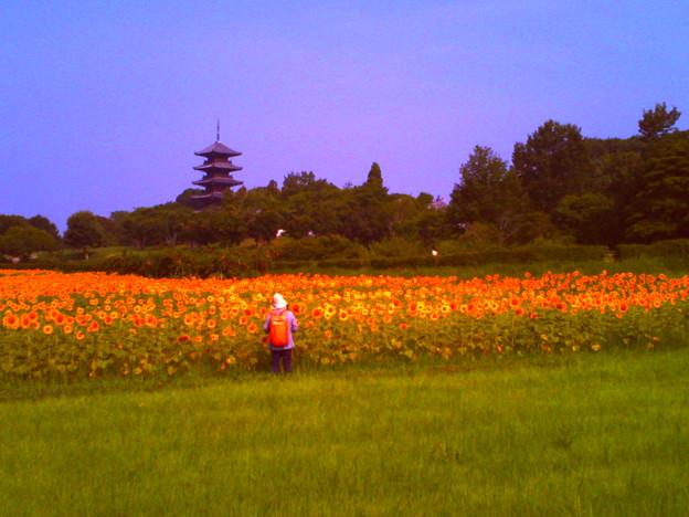 写真: 吉備路五重塔