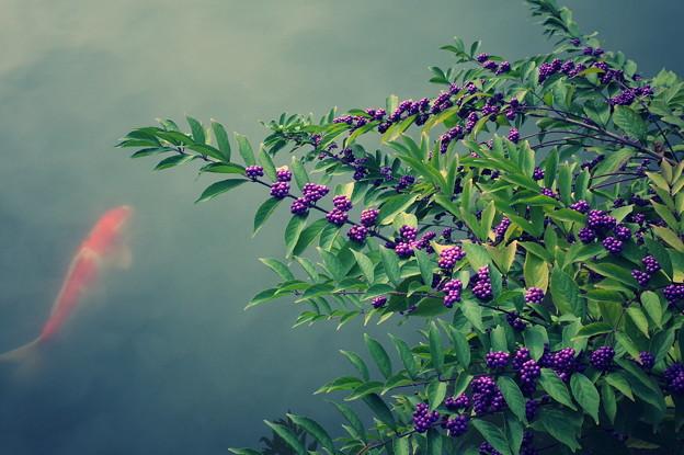 写真: 後楽園
