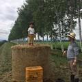 写真: となりは一面小豆畑