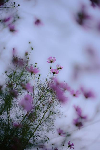 写真: NNN_0272