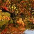 写真: モネの池秋3
