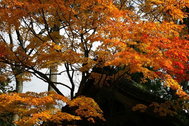 写真: 鶏足寺1