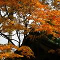Photos: 鶏足寺1