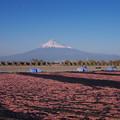 Photos: 富士山と桜エビ