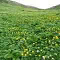 [2017年7月23日]荒川岳のお花畑