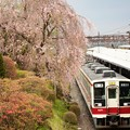 枝垂れ桜とツツジ咲く東武日光駅