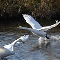 写真: 水面を翔る
