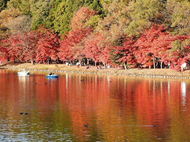 紅葉の公園ボート池