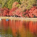 写真: 紅葉の公園ボート池