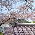 瓦と桜のコラボ