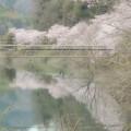 Photos: 淡い春色2