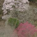 Photos: 谷の向こうの赤と桃色