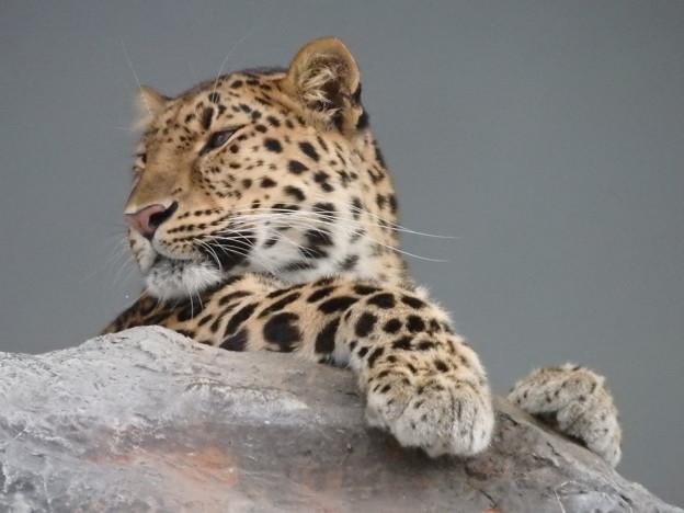 豹頭の仮面