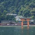 写真: 観光船から