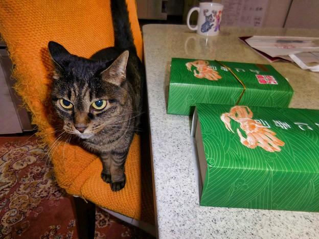 蟹寿司を狙うキジトラ猫