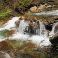 rs-170514_S1628_母胎淵~カエル岩(西沢渓谷) (5)