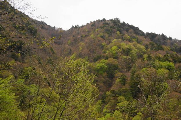 rs-170514_S1635_鶏冠山方面(西沢渓谷) (2)