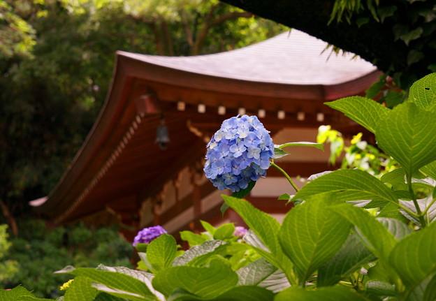 rs-170622_07_紫陽花・SL(妙楽寺) (10)