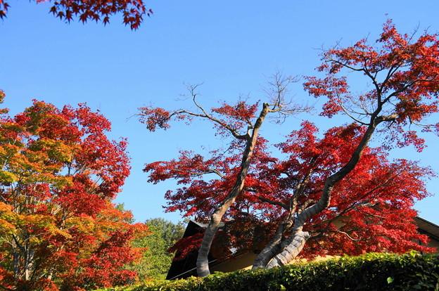 171107_07_日本庭園の様子・S18200(昭和記念公園) (34)