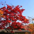 171107_07_日本庭園の様子・S18200(昭和記念公園) (39)
