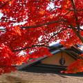 171107_07_日本庭園の様子・S18200(昭和記念公園) (44)