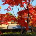 171107_07_日本庭園の様子・S18200(昭和記念公園) (52)