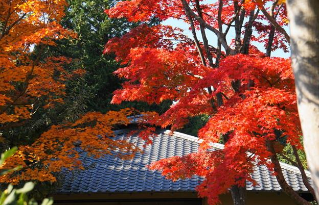171107_07_日本庭園の様子・S18200(昭和記念公園) (69)