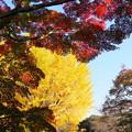 Photos: 171107_08_園内の様子・S18200(昭和記念公園) (49)