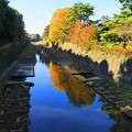Photos: 171107_08_園内の様子・S18200(昭和記念公園) (52)