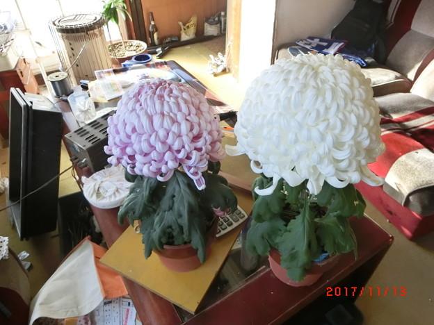 写真: 花のお手入れ