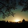 府中の森公園☆夜桜と夕陽