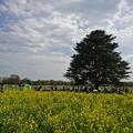 写真: 菜の花と空と...