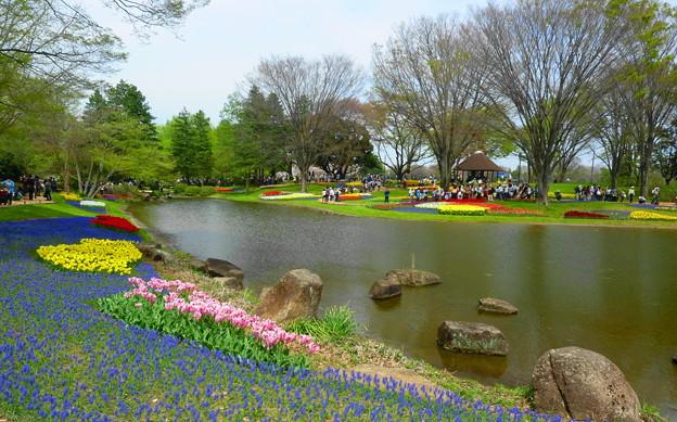 チューリップ☆昭和記念公園