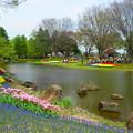 写真: チューリップ☆昭和記念公園