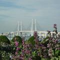 写真: 港が見える丘公園