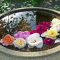 写真: 水に浮かぶバラ