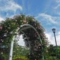 写真: roseのアーチ