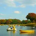 ボート池のまわりも秋の色♪