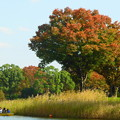 写真: ボート池のまわりも秋の色♪