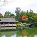 日本庭園の池のまわりも