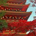 高幡不動の紅葉